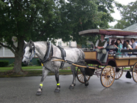 Cape May Carriage Compansy